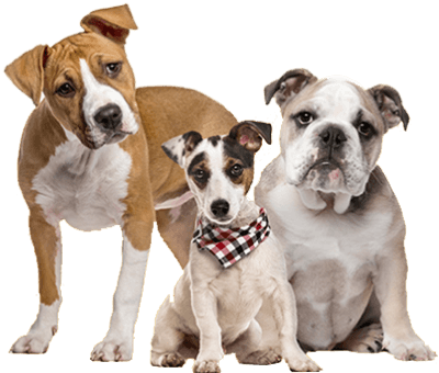 https://statelypetsupply.com/wp-content/uploads/2019/08/3_dogs.png